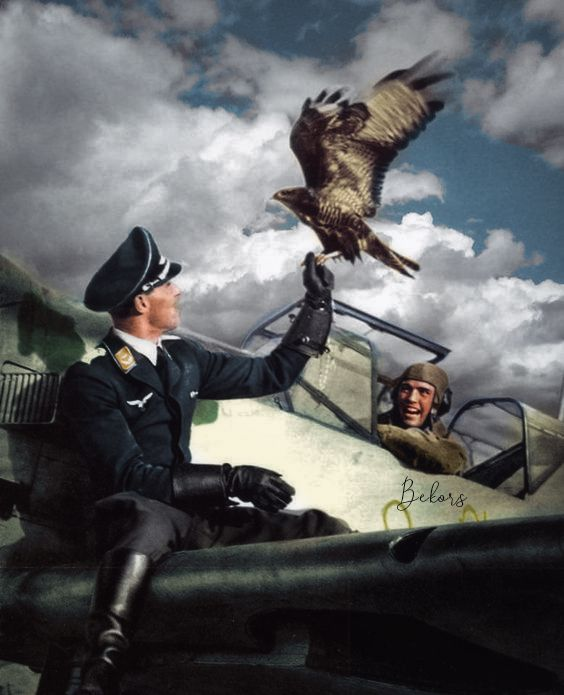 Eagle and Falcon